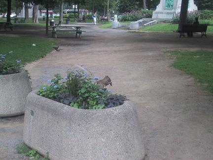 Un parc avec pleins d'écureils