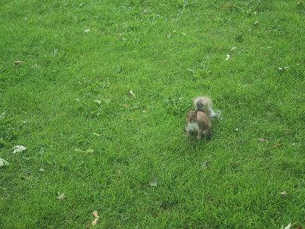 Encore des écureuils